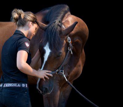 ostéopathe chevaux languedoc roussillon