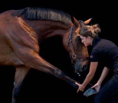ostéopathe chevaux montélimar